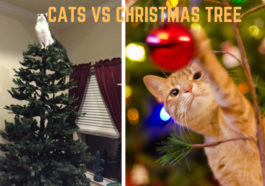 Cat vs Christmas tree