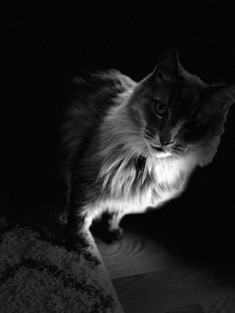 cat in darkness