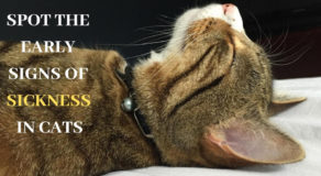 surprising signs of cats sickness