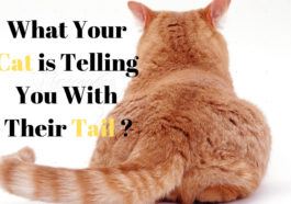 what your cat is telling your with their tail