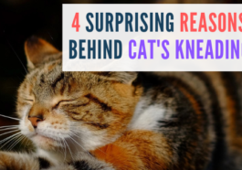 reasons behind cats kneading