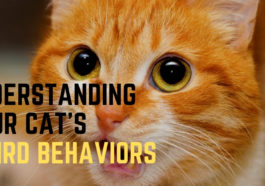 cat's strange behaviors