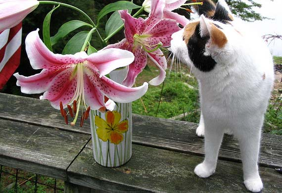Avoid poisonous plants for cats