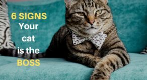 signs your cat owns you