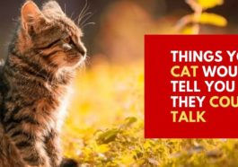 Things Your Cat Would Tell You if They Could Talk