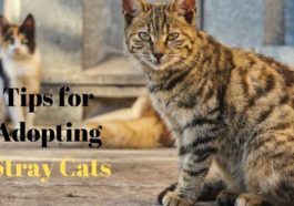 How to adopt stray cats