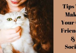 Tips to make your cat friendly and social