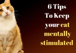 how to keep your cat mentally fit