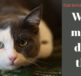 common cat behaviours explained,