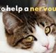 how to help a nervous cat