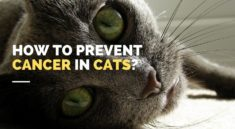 Tips for preventing cancer in cats