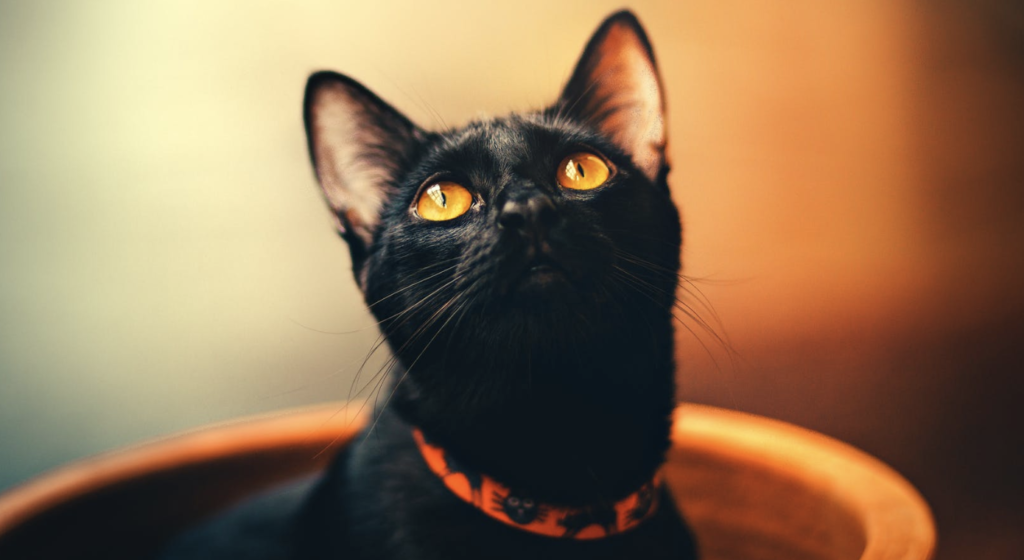 halloween safety for cats