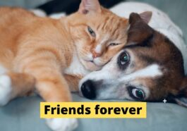cat and dog are Friends forever