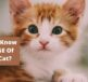 Do you know the age of your cat