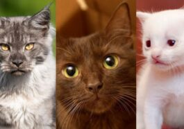 Most Beautiful and Rare Cat Fur Colors
